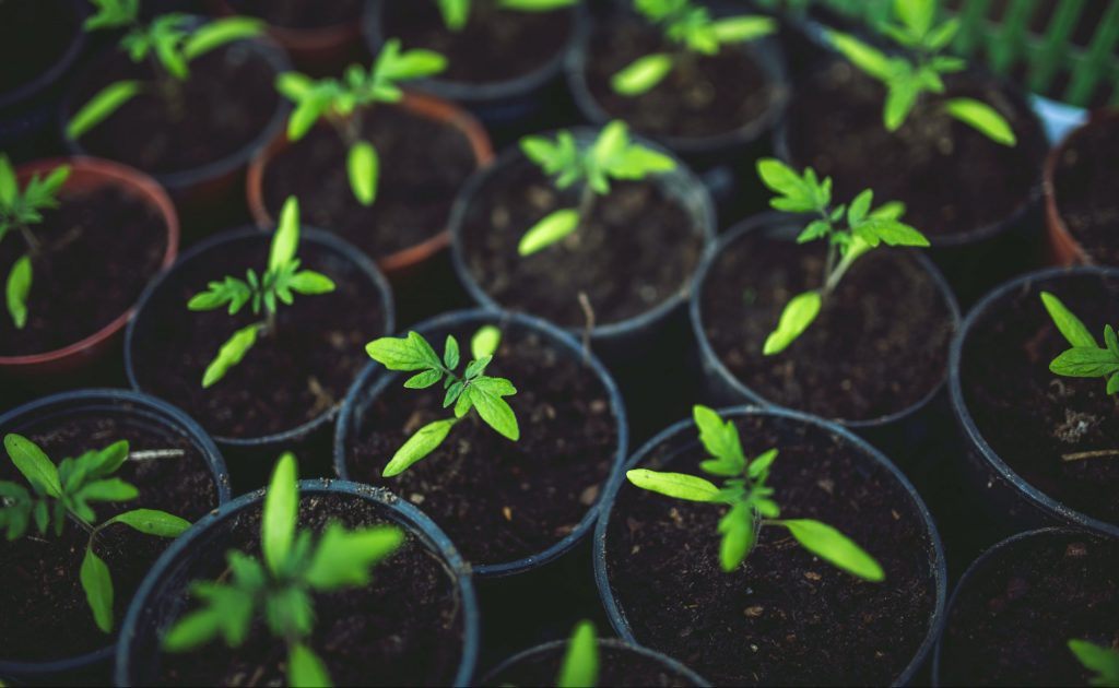 A Proper Planting Guide for Your Dream Greenhouse