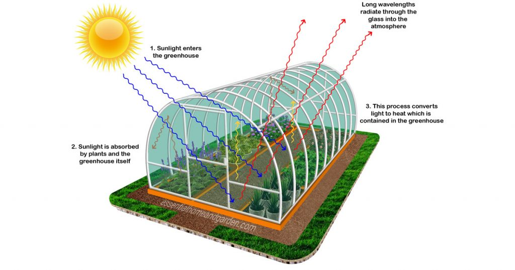 How Does a Greenhouse Work and What it Actually Does?