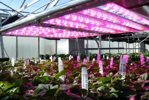 artificial greenhouse light