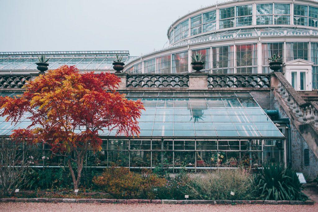 best Backyard Greenhouse