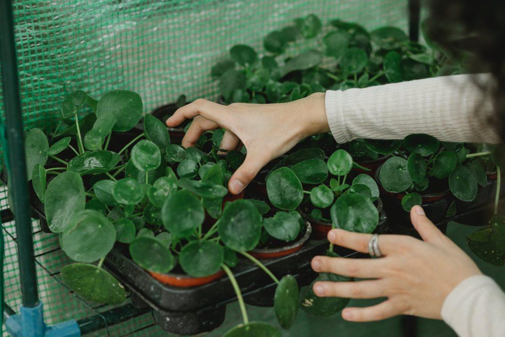 best mini greenhouse