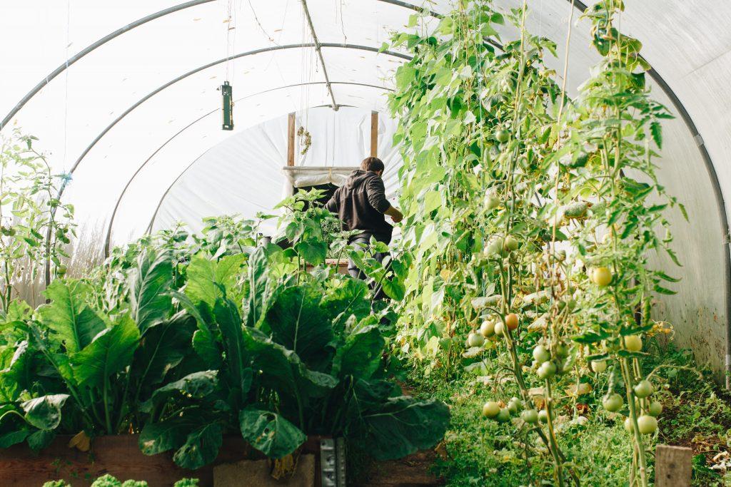 Best Outdoor Greenhouse