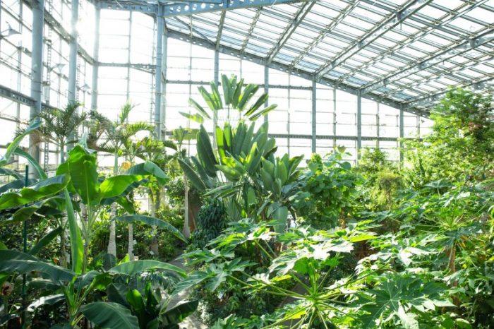 Best Glass Greenhouse